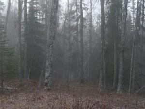 Mist + Trees = Mysteries
